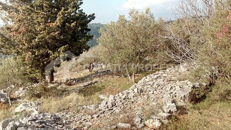 oliveyard plot for saleKorcula island (10)