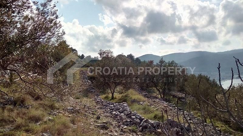 oliveyard plot for saleKorcula island (11)