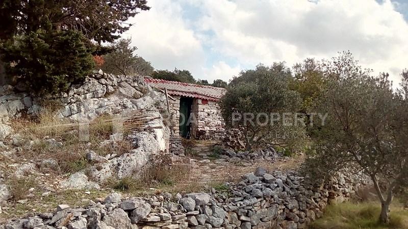 oliveyard plot for saleKorcula island (12)