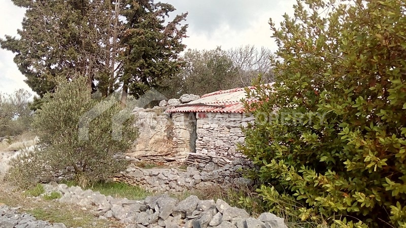 oliveyard plot for saleKorcula island (13)