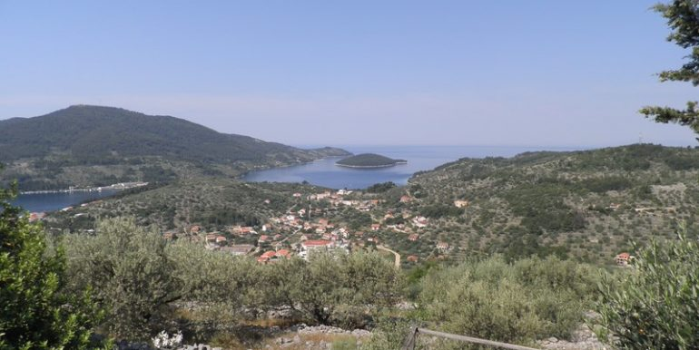 Oliveyard with small stone house, Korcula island