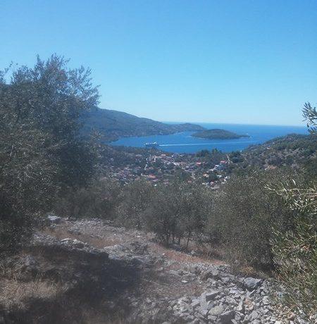 oliveyard plot for saleKorcula island (6)