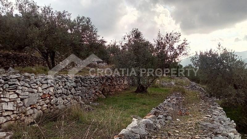 oliveyard plot for saleKorcula island (7)