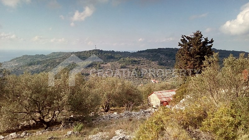 oliveyard plot for saleKorcula island (9)