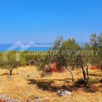 Agricultural plot for sale Brac island - 1752 - plot (1)