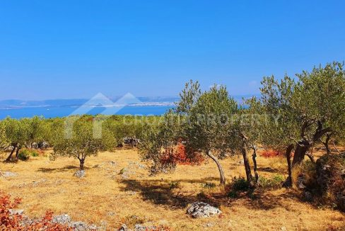 Agricultural plot for sale Brac island - 1752 - plot (1)